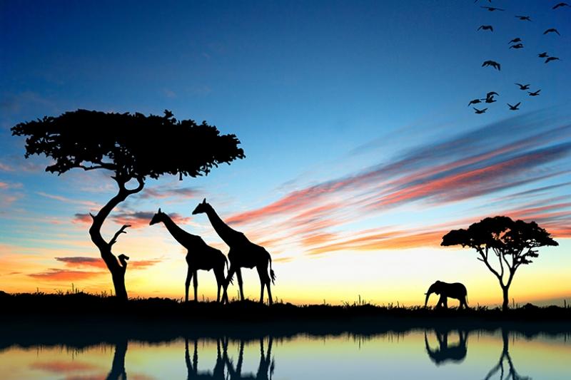 Afrikada Gün Doğumunda Hayvanlar