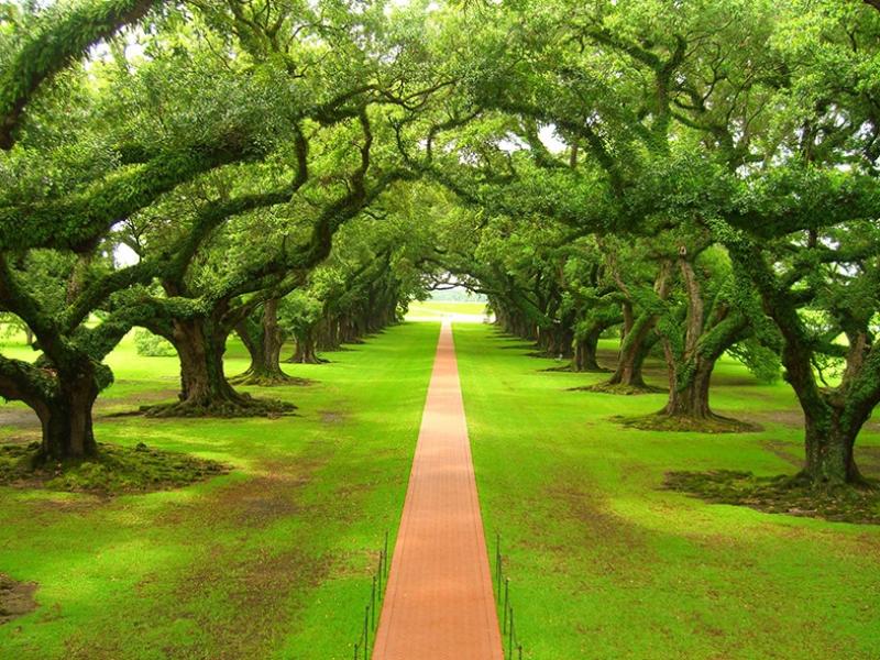 Ağaç Yol Patika Kanvas Tablo