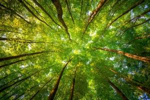 Ağaçlar Doğa Manzaraları Kanvas Tablo