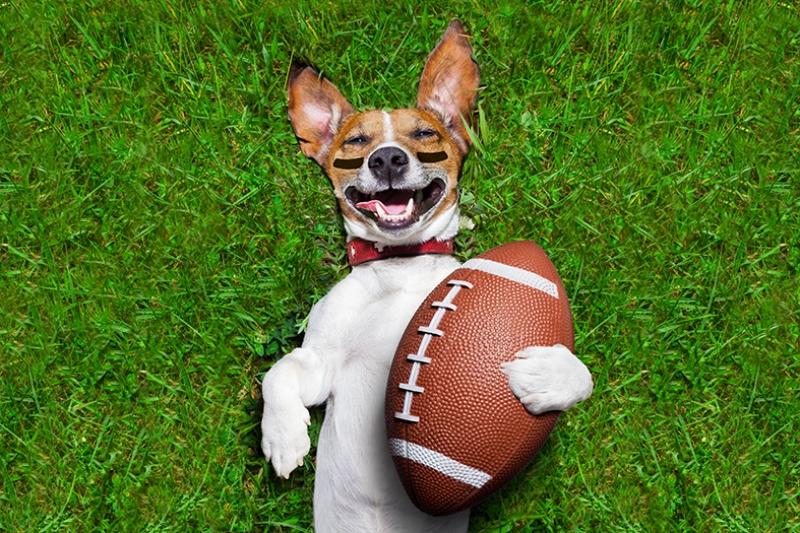 Amerikan Futbolcusu Köpek Hayvanlar Kanvas Tablo