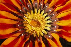 Arı ve Çiçek Doğa Manzaraları Kanvas Tablo
