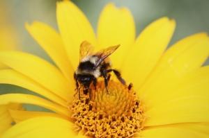 Arı ve Çiçek Floral Sanat Kanvas Tablo