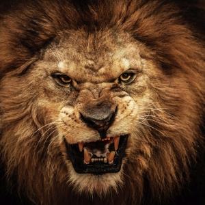 Arslan ve Ailesi-10, Kızgın Aslan Kanvas Tablo