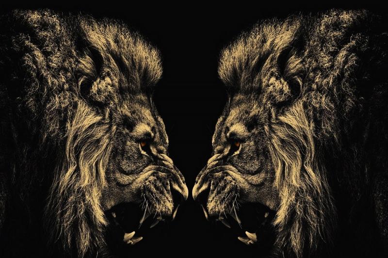 Arslan ve Ailesi-4 Kızgın Aslan Kanvas Tablo