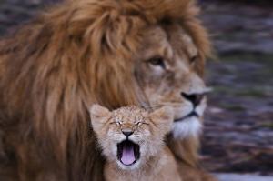 Arslan ve Ailesi-5, Baba ve Oğul Arslan Kral Kanvas Tablo