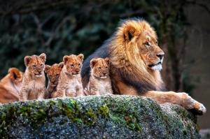 Arslan ve Ailesi-5a, Baba ve Oğul, Arslan Kral Kanvas Tablo