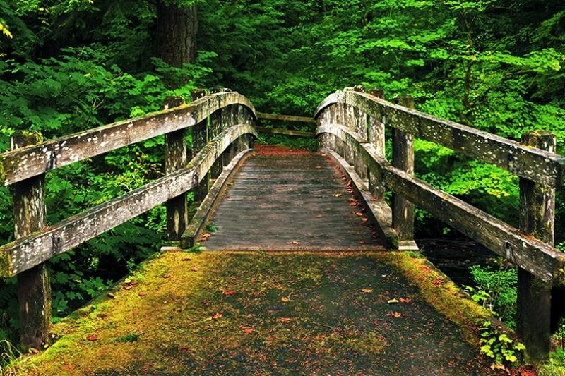 Asma Köprü Yeşillikler İçinde Kanvas Tablo