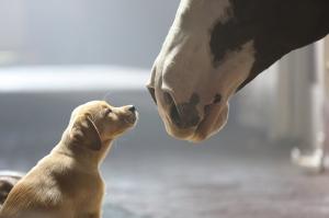 At ve Arkadaşı Sevimli Köpek Hayvanlar Kanvas Tablo