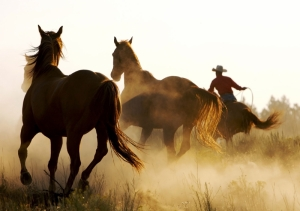 Atlar 2 At Sürüsü Hayvanlar Kanvas Tablo