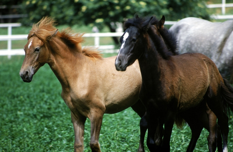 Atlar 3 At Sürüsü Hayvanlar Kanvas Tablo