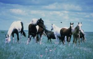 Atlar 4 Siyah At Hayvanlar Kanvas Tablo