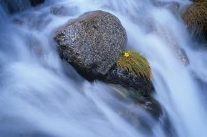 Avustralya Orman Şelale Nehir 10 Doğa Manzaraları Kanvas Tablo