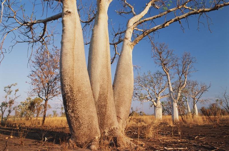 Avustralya Orman Şelale Nehir 2 Doğa Manzaraları Kanvas Tablo