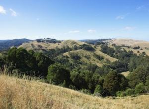 Avustralya Orman Şelale Nehir 3 Doğa Manzaraları Kanvas Tablo