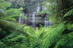 Avustralya Orman Şelale Nehir 4 Doğa Manzaraları Kanvas Tablo