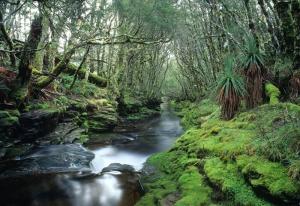 Avustralya Orman Şelale Nehir 5 Doğa Manzaraları Kanvas Tablo
