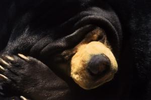 Ayılar 2 Miskin Ayı Hayvanlar Kanvas Tablo