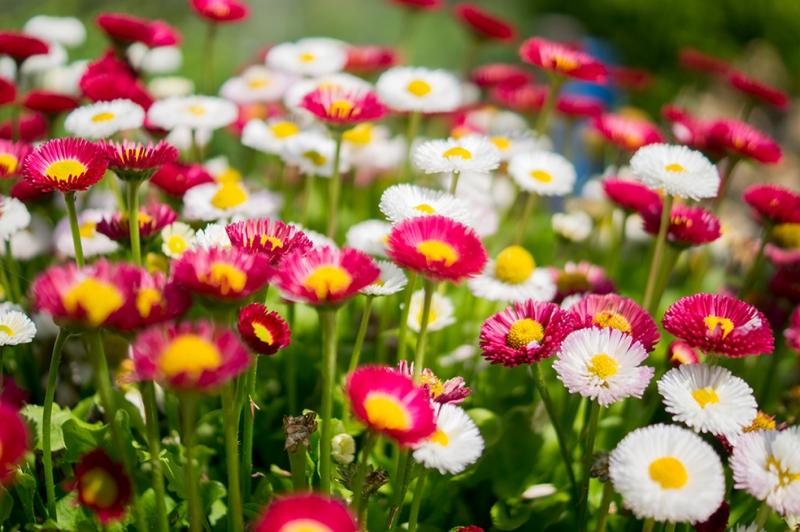 Bahçe 2 Floral Sanat Kanvas Tablo