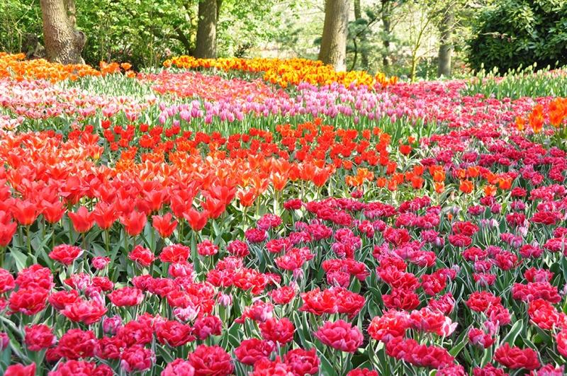 Bahçe 6 Floral Sanat Kanvas Tablo