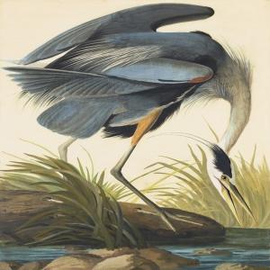 Balıkçıl Kuşlar Modern Sanat Kanvas Tablo