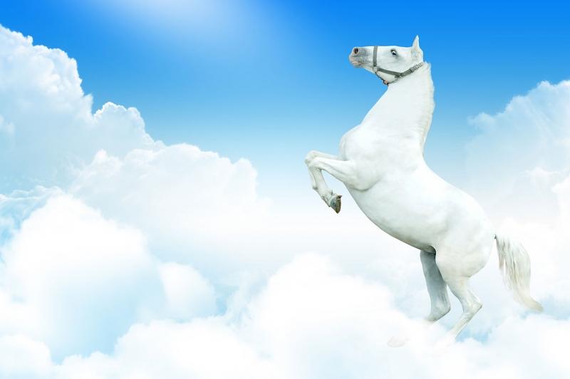 Beyaz At 1 Şaha Kalkmış Koşan Atlar Hayvanlar Kanvas Tablo