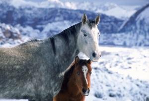 Beyaz At 11 Şaha Kalkmış Koşan Atlar Hayvanlar Kanvas Tablo