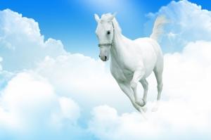 Beyaz At 2 Şaha Kalkmış Koşan Atlar Hayvanlar Kanvas Tablo