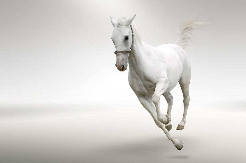 Beyaz At 3 Şaha Kalkmış Koşan Atlar Hayvanlar Kanvas Tablo