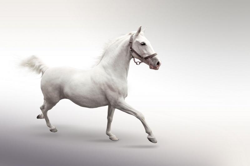 Beyaz At 4 Şaha Kalkmış Koşan Atlar Hayvanlar Kanvas Tablo