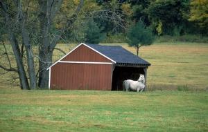 Beyaz At 9 Şaha Kalkmış Koşan Atlar Hayvanlar Kanvas Tablo
