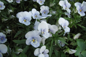 Beyaz Cicekler Floral Kanvas Tablo
