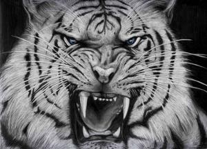 Beyaz Kaplan Çizimi Hayvanlar Kanvas Tablo