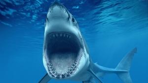 Beyaz Köpek Balığı Hayvanlar Kanvas Tablo