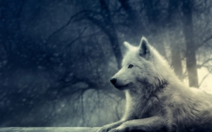 Beyaz Kurt Hayvanlar Kanvas Tablo