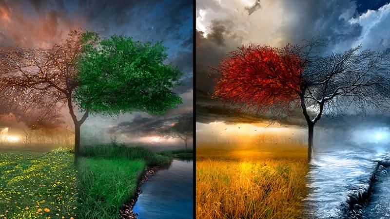 Bir Ağaç Dört Mevsim Doğa Manzaraları Kanvas Tablo