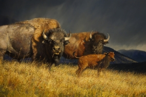 Bizon Ailesi, Bizonlar, Amerika, Hayvan Temalı Kanvas Tablo