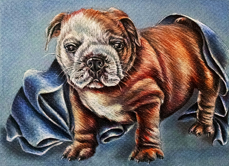 Bulldog Hayvanlar Kanvas Tablo