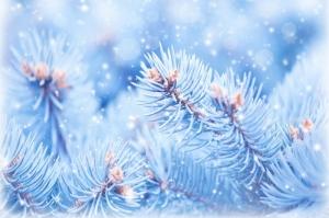 Çam Ağaçları Kar HD Doğa Manzaraları Kanvas Tablo