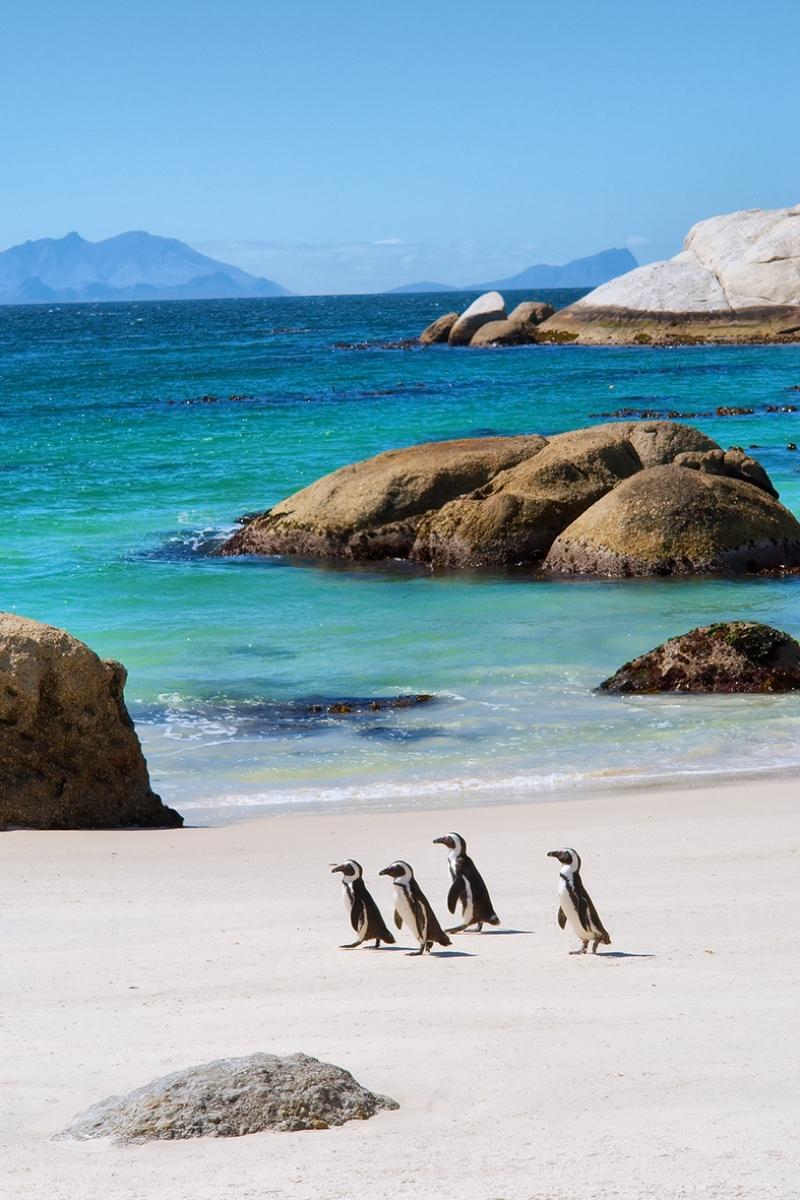 Cape Town Güney Afrika Penguenler Doğa Manzaraları Kanvas Tablo