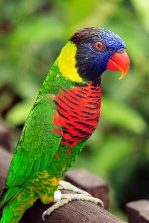 Cennet Papağanı Hayvanlar Kanvas Tablo