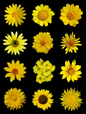 Çiçek 13 Floral Sanat Kanvas Tablo