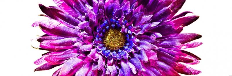 Çiçek 20 Floral Sanat Kanvas Tablo
