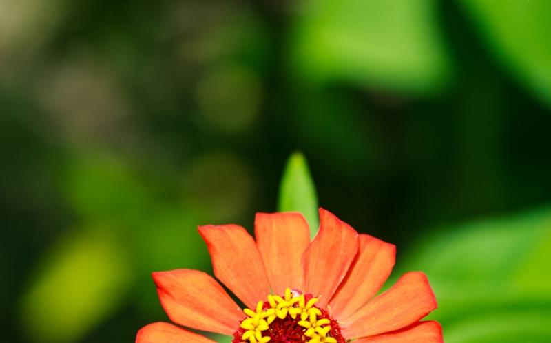 Çiçek 21 Floral Sanat Kanvas Tablo