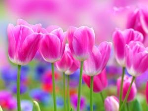 Çiçek 9 Floral Sanat Kanvas Tablo