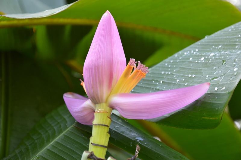 Çiçek Doğa Manzaraları Kanvas Tablo