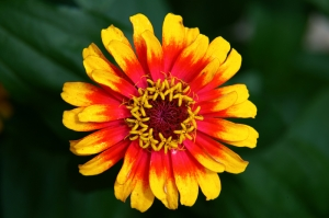 Çiçek Floral Sanat Kanvas Tablo