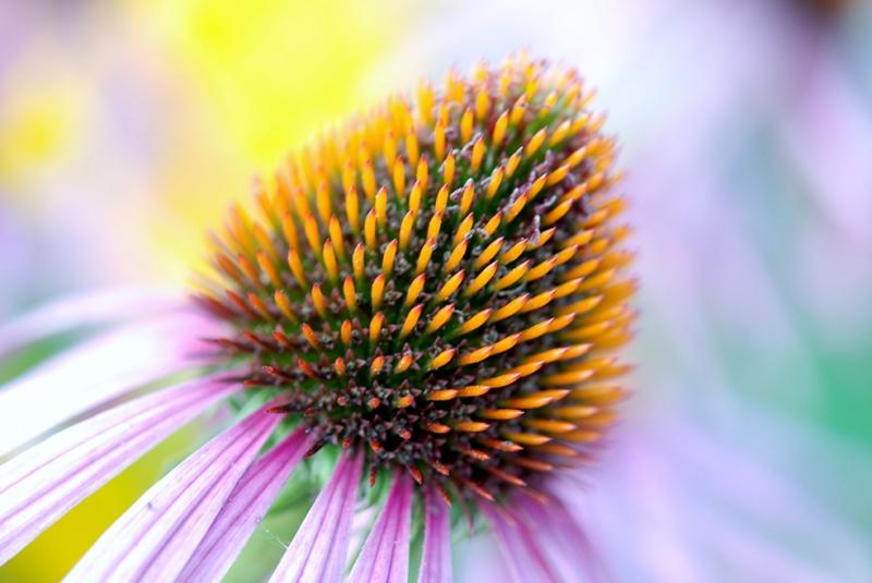 Çiçek Goncası Doğa Manzaraları Kanvas Tablo