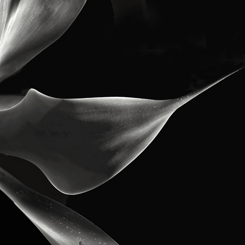 Çiçek Makro Çekim Fotoğraf Kanvas Tablo