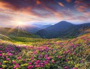 Çiçek Manzarası ve Gökyüzü Kanvas Tablo