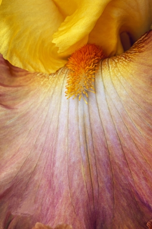 Çiçek Sanat Kanvas Tablo
